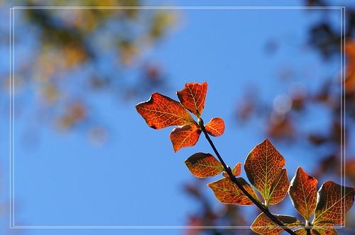 PICT9680