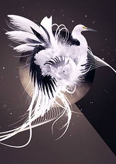 Rebirth (---stress---origami samurai!) Tags: wallpaper white abstract black bird birds composition circle swan wing feather shapes sorin gradient bday vector tale bechira