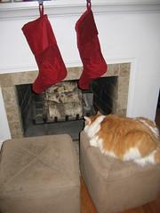Jonesy waits for Santa 1 (slijleong) Tags: christmas chimney cat hearth jonesy