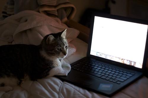 Power Feline User