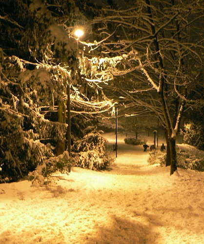 A Path in the Snow on the Winters Solstice