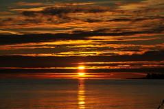 Red sunset and a swan.. Dragoer, Denmark (OrangUtanSam) Tags: sunset sky cloud sun birds clouds denmark dragør swan skies copenhagenairport øresund dragoer redskies oeresund