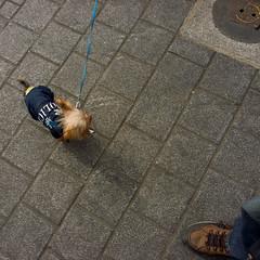 police and dog uu (YENTHEN) Tags: taiwan streetphotography taipei 台灣 台北 圓山 yenthen