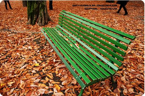 日内瓦大学校园的椅子