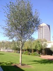 Phoenix Art Museum: Dorrance Sculpture Garden