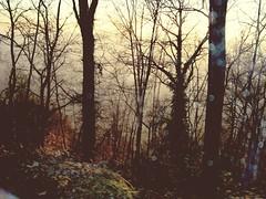 Trees (Elanorya) Tags: alberi natura sentiero colori montagna paesaggio edera