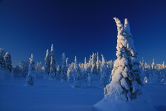 blue moment (Fredww) Tags: winter finland lapland lappi pallas jeris muonio