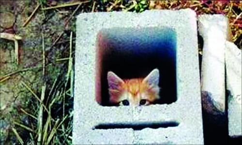 千万别玩躲猫猫