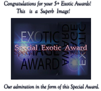 Exotic Special award/