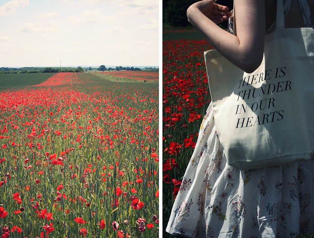 Poppies & Thunder