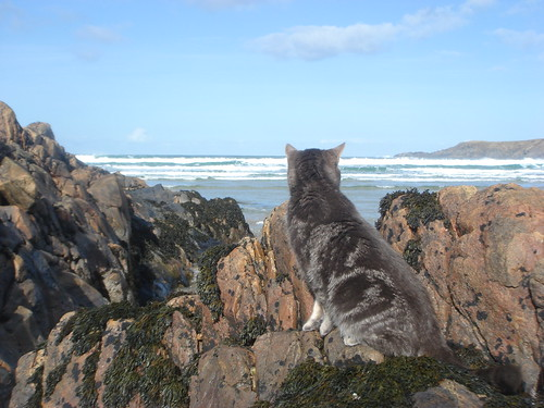 Rocky the cat on the rocks!!