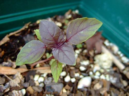 garden april 21, 2008 015