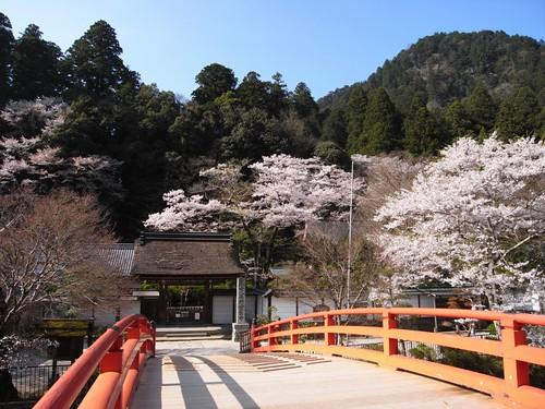 室生寺(桜)