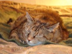 Sleepy Clara