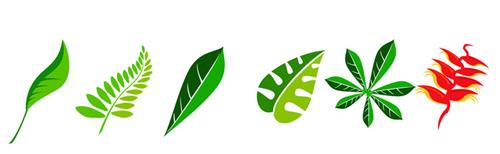 hojas vectorizadas