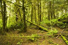 Temperate Rainforest - Pacific Rim National Park, Tofino, BC (laszlofromhalifax) Tags: bc vancouverisland tofino pacificrimnationalpark temperaterainforest