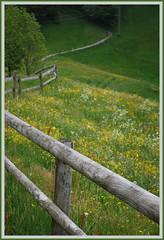 leading forward (MarcelS) Tags: flowers fence path meadow wiese blumen zaun weg nikond60