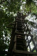 07-treehouse (IrvineShort) Tags: conservation lagos nigeria lekki