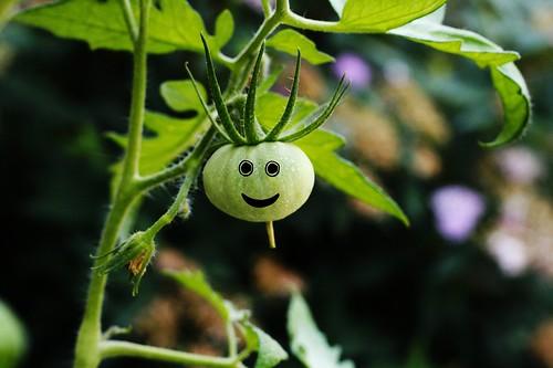 Happy Tomato!