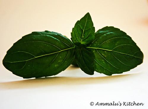 Herb mania - basil
