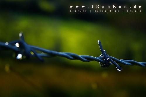 www.fRanKon.de