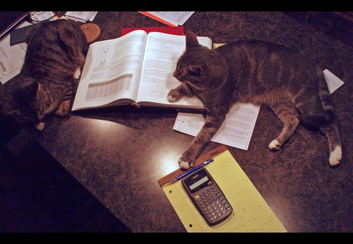 The cats study physics with me.