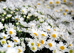 Canteiros (Quinta Flowers) (Jorge L. Gazzano) Tags: nikond80