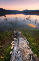 Trunk (Csar Zarallo) Tags: madrid espaa landscape spain tokina1224 paisaje sierra canoneos350d cokinnd8 ultimateshot ostrellina absolutelystunningscapes csarzarallo