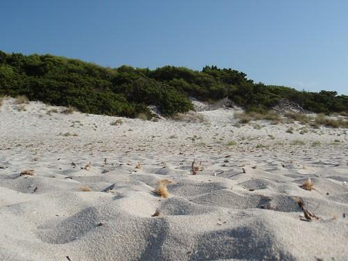 plage et pinède