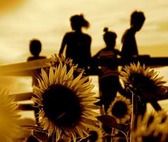 summer forever ... (ichiro kishimi) Tags: family portrait flower evening kyoto sunflower inspiredbylove imagepoetry fivestarsgallery mywinners artlibre goldenphotographer diamondclassphotographer flickrdiamond ysplix theperfectphotographer thegreatshooter grouptripod winasmileaward thedantecircle