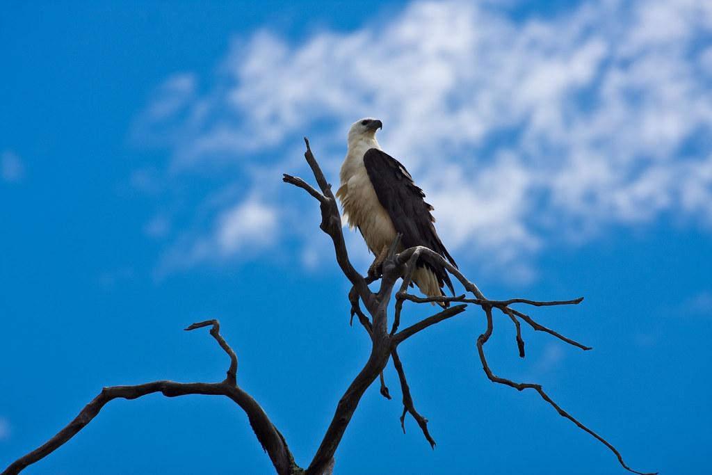 Fraser Island 0595