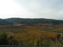 """Vista de La Vega, con el Fondo de Las Viñas y El Pinar • <a style=""""font-size:0.8em;"""" href=""""http://www.flickr.com/photos/54995335@N00/2861060906/"""" target=""""_blank"""">View on Flickr</a>"""