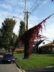 Telephone pole with overgrowth
