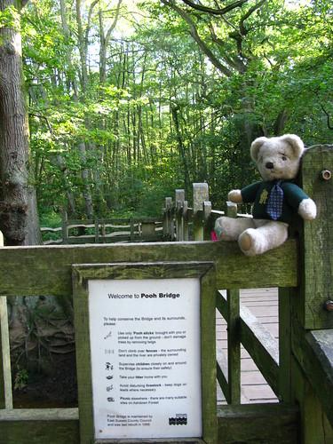 Bear at Pooh Bridge