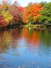 Autumn Pond (Mr. Ducke) Tags: autumn trees fall colors leaves ma pond blueribbonwinner plainville abigfave impressedbeauty