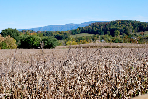 v corn maze 084