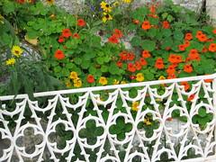 flowers still blooming in October