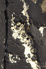 Off the Wall in Seattle (detail 7) 10-11-08 (stevenascroggins) Tags: seattle abstract art history happy layers robertrauschenberg markrothko offthewall ageless franzkline frankstella adreinhardt aaronsiskind robertmotherwell blackpaintings stevescroggins