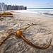 Kelp Me by Brian Auer