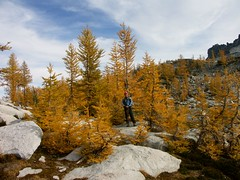 Larches are better than slide alder