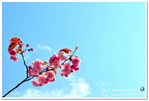 Hokkaido_2083