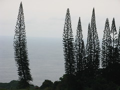 View from the Hana Highway at dusk. This is a color photo. (JannK) Tags: ocean trees hawaii view maui hanahighway 1001nights soe blueribbonwinner abigfave araucariacolumnaris ultimateshot naturessilhouettes theperfectphotographer goldstaraward rubyphotographer qualitypixels panoramafotogrfico naturescreations dragondaggerphot