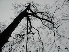 サワグルミの雨 檜原都民の森