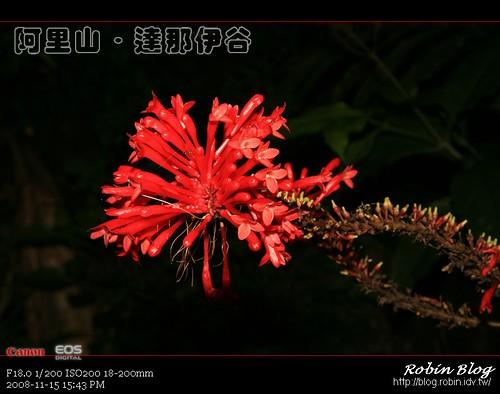 你拍攝的 20081115數位攝影_阿里山之旅358.jpg。
