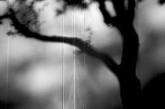 tree (xgray) Tags: light shadow bw tree film contrast analog cn austin texas afternoon kodak olympus xa2 400 olympusxa2 kodakbw400cn tarp 400cn bw400cn kodakprofessionalbw400cn