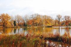 Brittens pond,Guildford (ashley.gill15) Tags: uk england nikon surrey guildford fabulous smrgsbord d40 brittenspond nikond40 qualitypixels