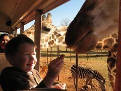 emery with giraffe