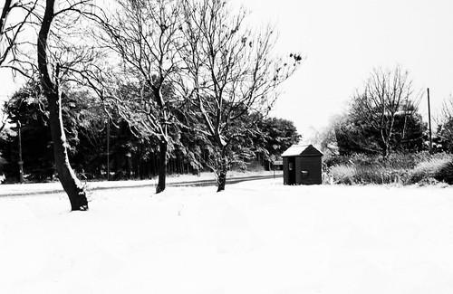 Snowy photograph