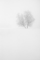 Winterberg - The tree (Geoffrey Gilson) Tags: schnee winter white snow cold tree nature landscape cool interesting scenery superb wildlife magic awesome hiver winner isolation neige simple paysage pure weiss arbre blanc soe baum magie winterberg winterscene blueribbonwinner supershot abigfave platinumphoto anawesomeshot theunforgettablepictures canon40d theperfectphotographer tup2 multimegashot