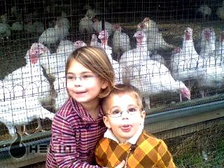 Lee's Turkey Farm